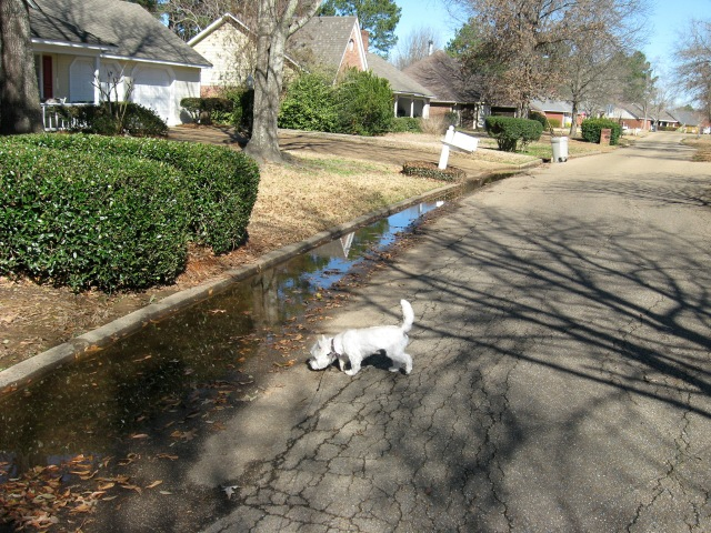 "Starlight gravitates to water puddle ""to see if there is any litter in it."""