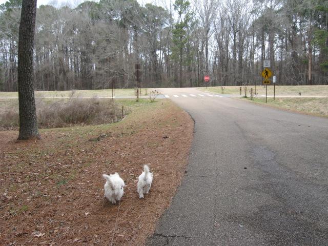 Dragging my manservant on a walk/run on my Trace.