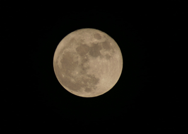 I think my manservant is lonely tonight because he's outside taking pictures of the moon at our den.