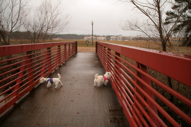It is certainly a wet and chilly day at my manservant's walk/run park.