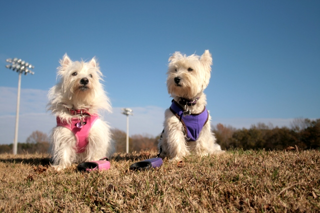 We're posing on the levee at my futball fields.