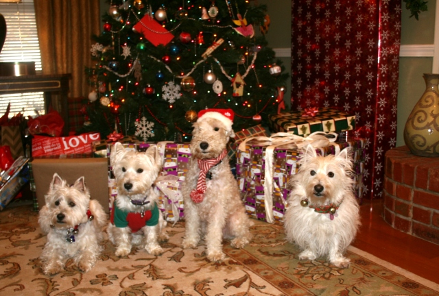 Merry Christmas, pooches!!  From our pack to yours!