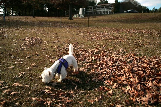 Piles of leaves are known for the interesting smells in them.