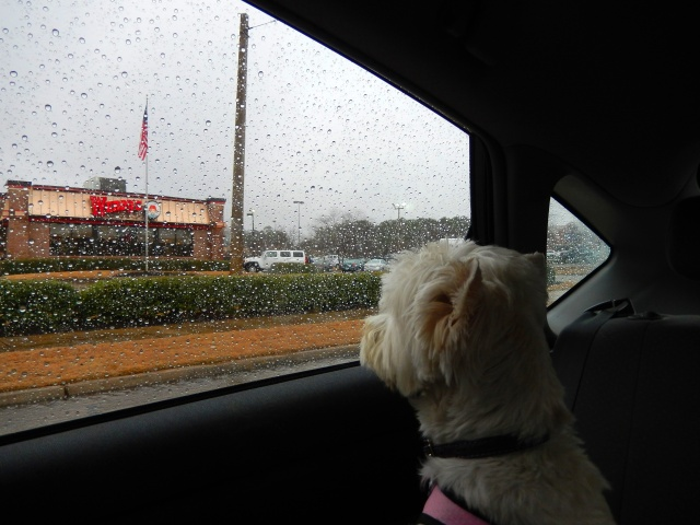 Starlight looks disappointedly at the rain during our failed excursion attempt yesterday.