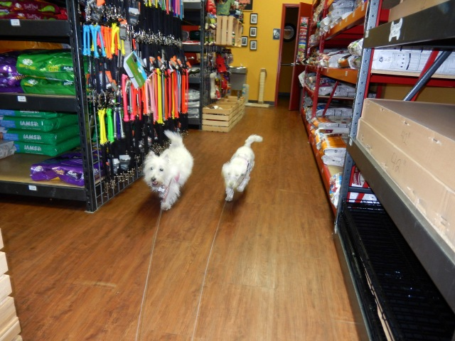 A visit this morning to our favorite pooch food and toy store!