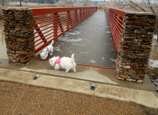 Our pawbridge is impassable.