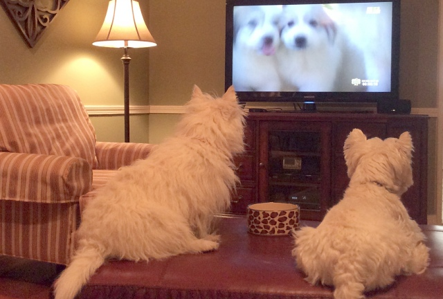 We'll be glued to the television all afternoon watching THE PUPPY BOWL!!!