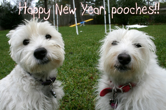 ...from our pack to yours!