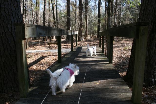 We're starting our excursion through my arboretum.