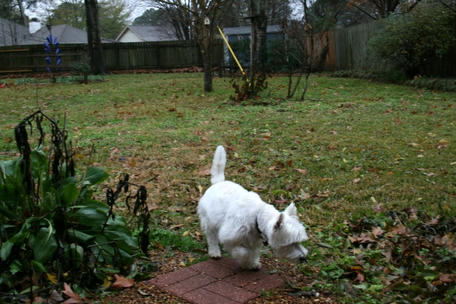 I'm going to stay on the paver so my paws don't get wet.