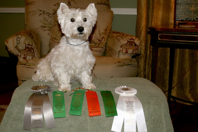Starlight poses with her weekend's trove of awards from the pooch rally trials.