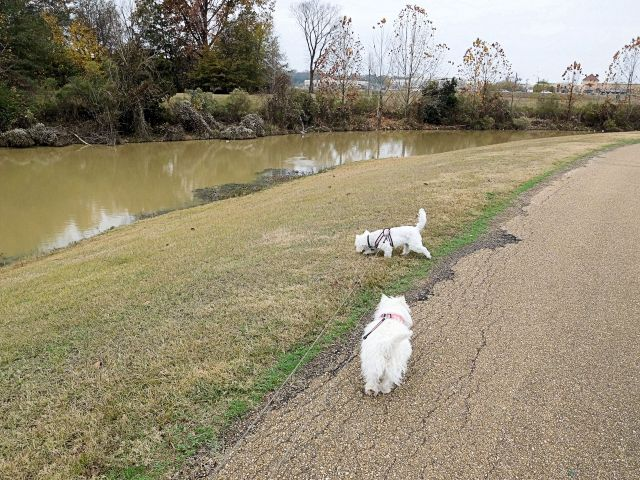 Here we are starting off on our excursion stroll at my manservant's walk/run park.