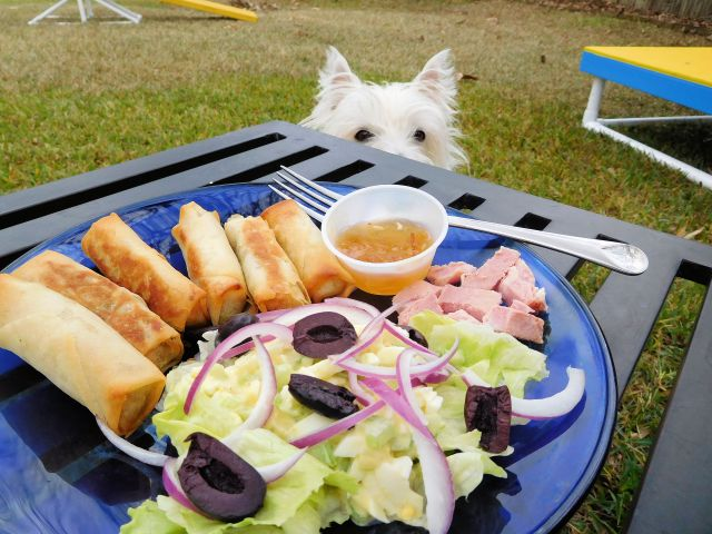 Our celebratory luncheon includes veggie spring rolls, green salad with egg salad, and a wee bit of ham for us carnivorous pooches!