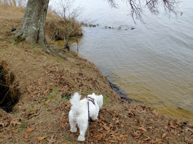 Starlight is trying to spy fish in the clear water.