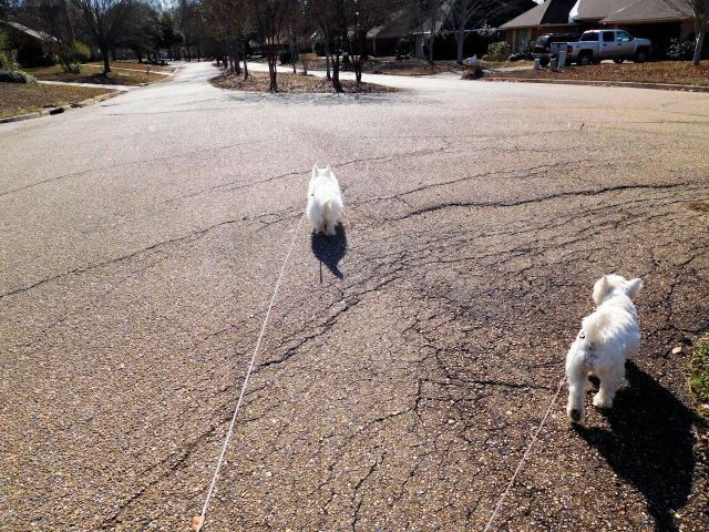 As usual, I'm leading the way on our poochhood excursion.