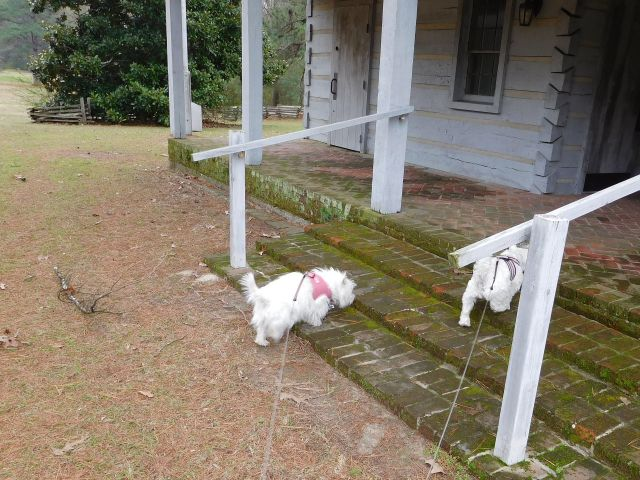 "Of course we're allowed up here.  It is called a ""dogtrot"" Starlight."