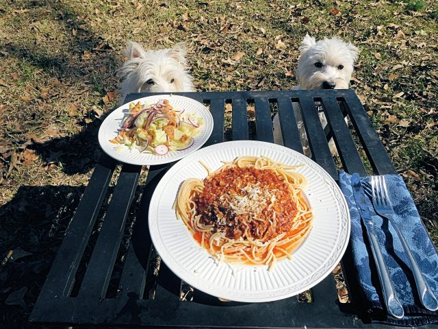 How do you expect us to eat spaghetti without our pooch bowls?