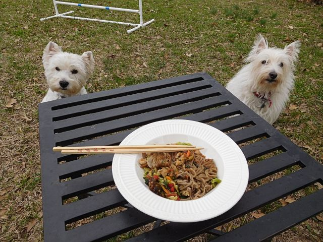 We gathered at the picnic bench to enjoy chicken teriyaki with soba noodles.