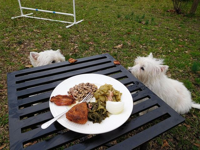 Starlight and I have pork belly while my manservant eats blackeyed peas, green beans and turnip greens with cornbread and onion at our picnic bench..