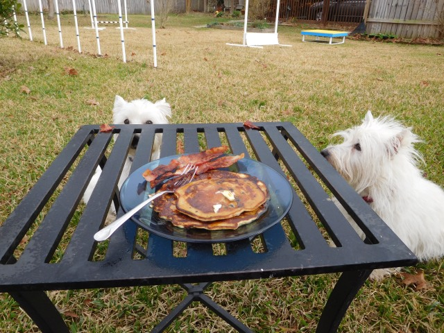 Starting the day off with blueberry pancakes and bacon at the picnic bench is a good thing.