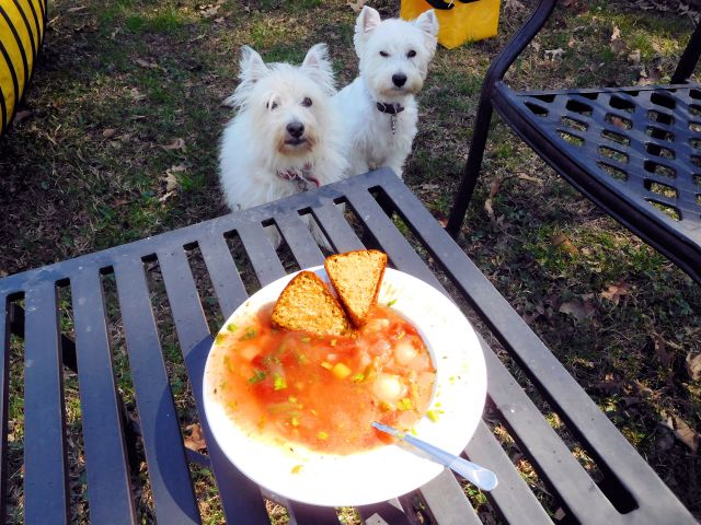 Vegetable boeuf soup with cornbread provides us with a delicious lunch (Starlight and I picked out all the boeuf).