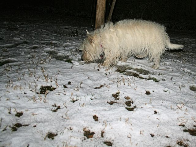 Five years ago today, pooches, on February 9, 2011!